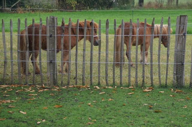 paardjes 't Paulsenhof